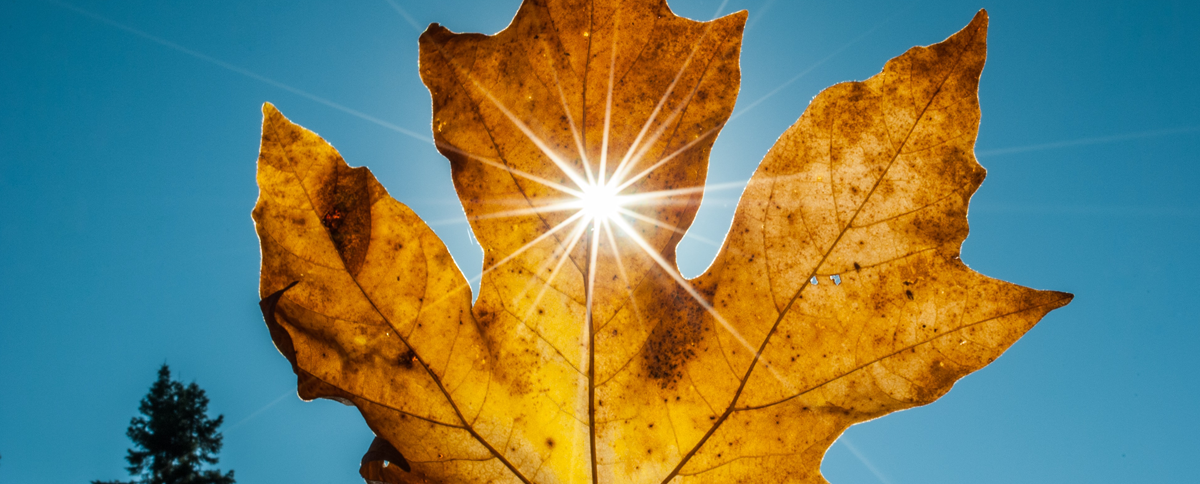 Image of leaf to represent the fall issue of Parasec's Alert newsletter