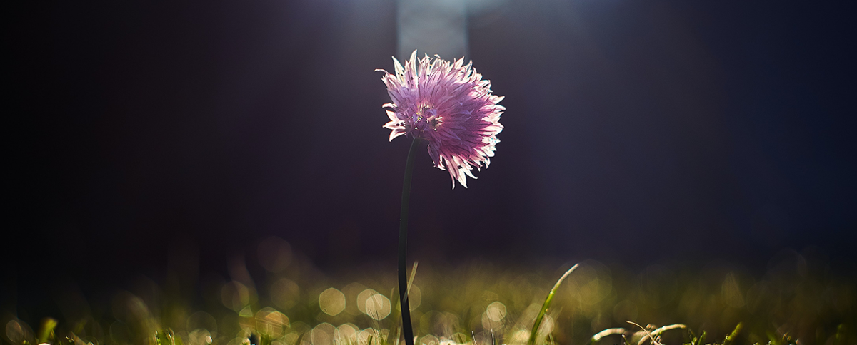 Main Image of Flower for Parasec's Alert